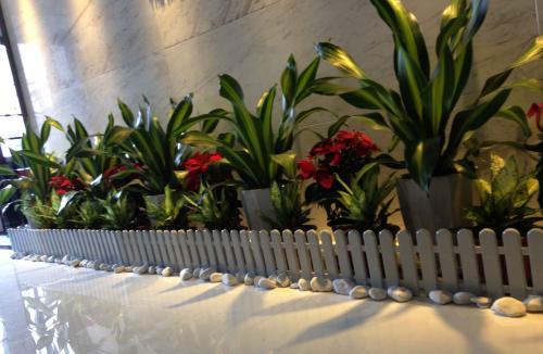 公司植物摆放装计效果图